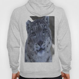 A Snow Leopard Stare Hoody