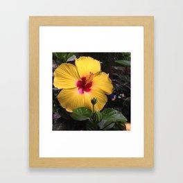 Habiscus yellow flower power Framed Art Print