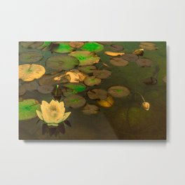 Summer Waterlily Pond Metal Print