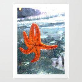 A STAR IN THE OCEAN Art Print