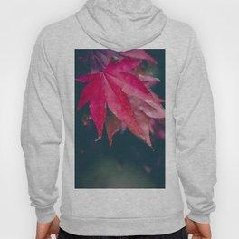 Red Japanese Maple Leaves Hoody