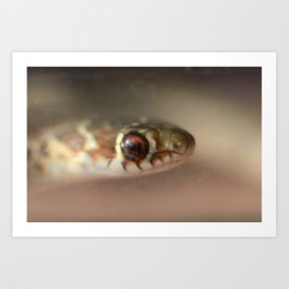 Snake or Fish? Art Print