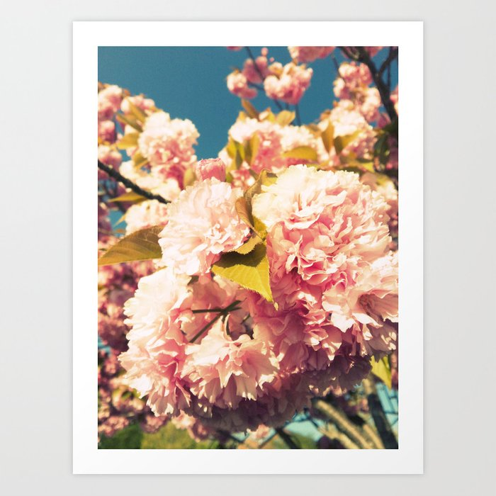 Old School Cherry Blossoms  Art Print