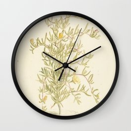 Flowering Mesembryanthemum from the Aizoaceae family, Laurens Vincentsz. van der Vinne, 1668 - 1729 Wall Clock