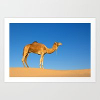 camel Art Prints featuring Camel by Chantal Seigneurgens