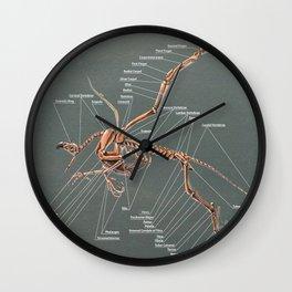 Gryphon Skeleton Anatomy Wall Clock