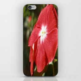 Close Up Of A Red Busy Lizzie Flower iPhone Skin