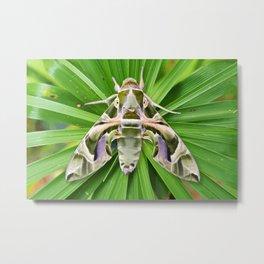 Oleander Hawk Moth on Radiating Plant Metal Print