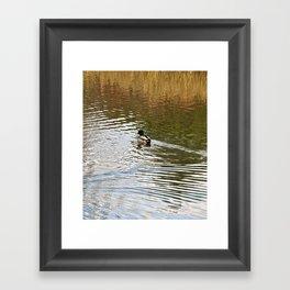 Duck on Pond Framed Art Print