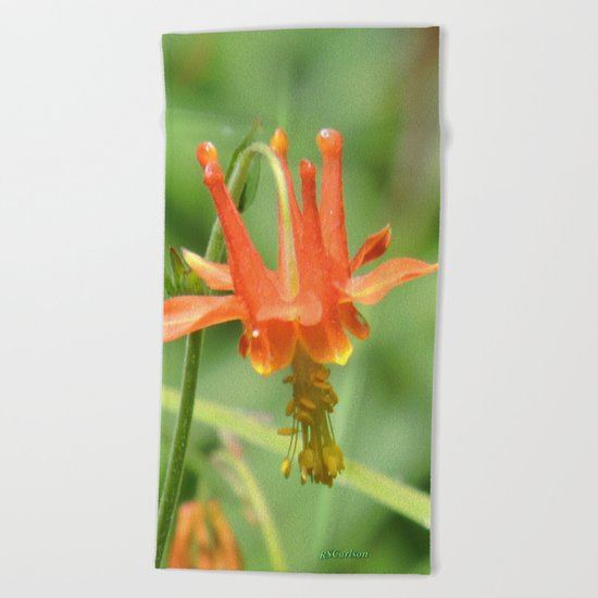 Columbine in the Breeze Beach Towel