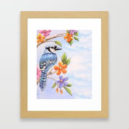 Blue Jay watercolor with Flowers Framed Art Print