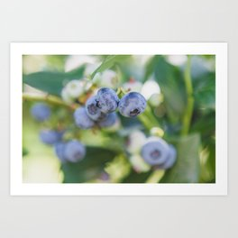 Perfect Pair at the Blueberry Patch Art Print