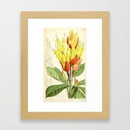 Sanchezia nobilis 5594 Framed Art Print