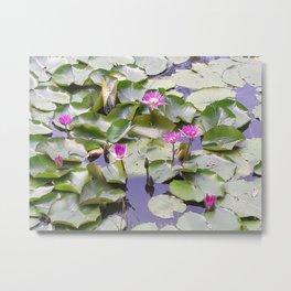 Nymphaeaceae - Langkawi, Malaysia Metal Print