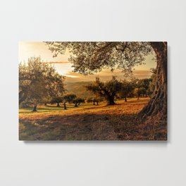 Olive Groves Along the Mountainside Metal Print