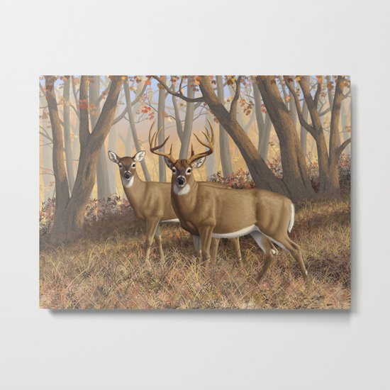 Whitetail Deer Trophy Buck and Doe in Autumn Metal Print