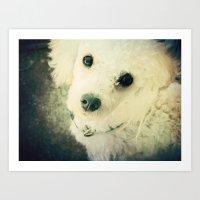 poodle Art Prints featuring Poodle by JMcCool