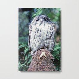 Tawny Frogmouth in Tasmania Metal Print