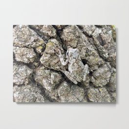 Grey tree frog Metal Print