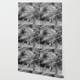Tree Black White Long Exposure Wallpaper