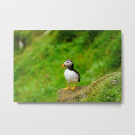The Puffins of Mykines in the Faroe Islands III Metal Print