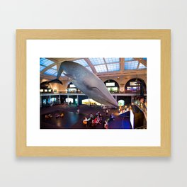 Museum of Natural History Whale Framed Art Print