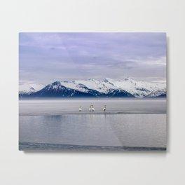 Swans on Ice Metal Print