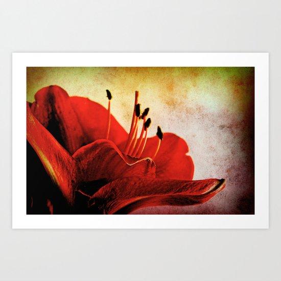 Amaryllis red  Art Print