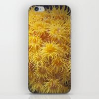 coral iPhone & iPod Skins featuring Coral by Deborah Janke