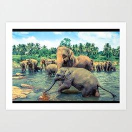 Pinnawala - Sri lanka Art Print