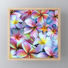 Rainbow Plumeria Framed Mini Art Print