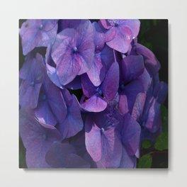 Violet Hydrangea Metal Print