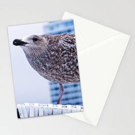 BAY WATCH - Seagull of Baltic Sea Stationery Cards