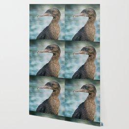 Flightless cormorant Galapagos bird Wallpaper