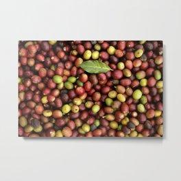 Fresh coffee fruits Metal Print