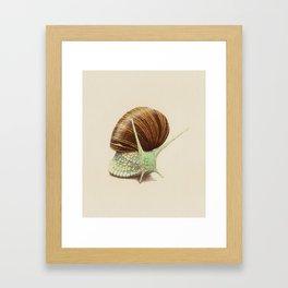 Snail Two Framed Art Print