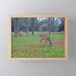 Bambi Framed Mini Art Print