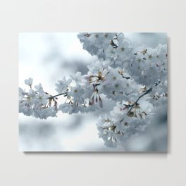 COOL BLOSSOMS Metal Print