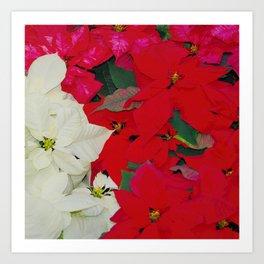 Poinsettias, Olbrich 5334 Art Print