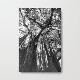 Black and White Banyan Metal Print