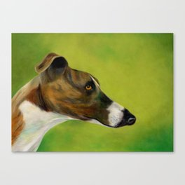 Brindle and white greyhound (a343) Canvas Print