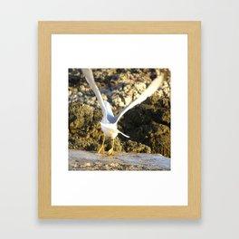 seagull flying Framed Art Print