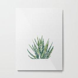 Zebra Cactus Metal Print