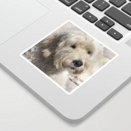 Dog Goldendoodle Golden Doodle Sticker