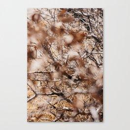 Desert Branches Canvas Print