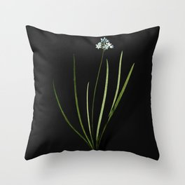 Vintage Spring Squill Botanical Illustration on Black (Portrait) Throw Pillow