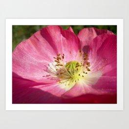 pink bloom focus IX Art Print