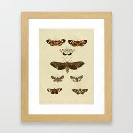 Vintage Moths Framed Art Print