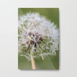 Dandelion EMBLEM Metal Print
