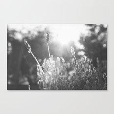 Lavender no. 1 Canvas Print